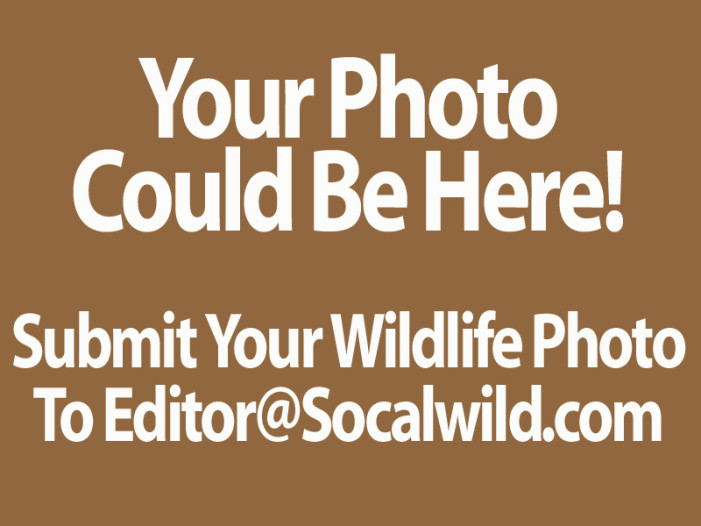Send Us Your Wildlife Snapshots!