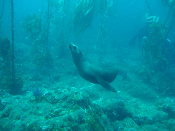 Saving Sick Sea Lions