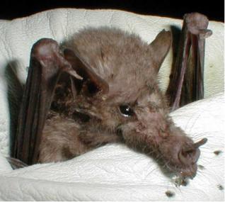 Bats, bats, bats!
