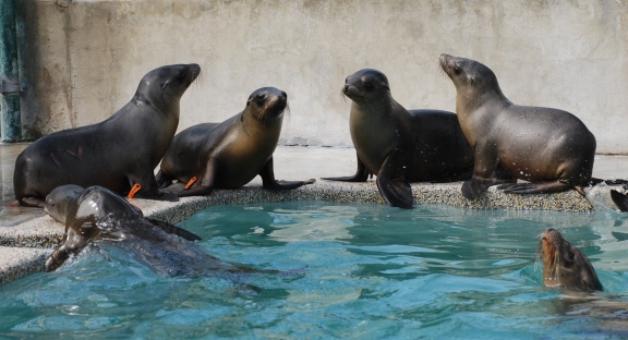 These pups will soon be released back into the ocean. (Photo: Brenda Rees)