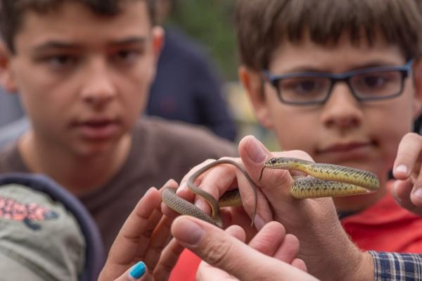 Reptile Hunting in Malibu Creek