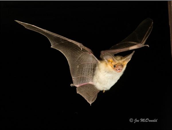 Bats in the Spotlight