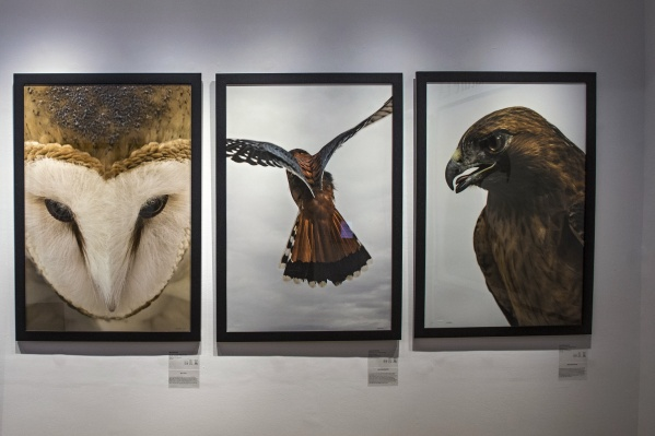 Bold Birds