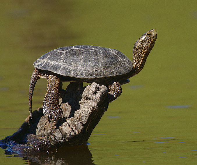 Which Way on World Turtle Day?