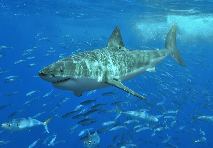Shark Discussion on July 15, 2014