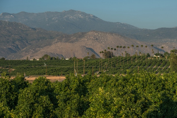 ORANGES, ORANGES, ORANGES -- agriculture rules in Valle Vista