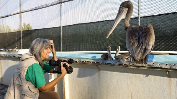 EYEING EACH OTHER - Filmmaker Judy Irving considers Gigi. PHOTO: PELICAN DREAMS