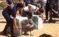 World Animal Day at IBR