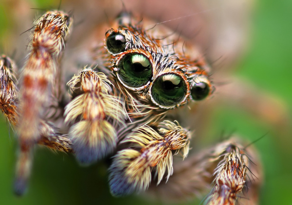 Spiders Exonerated!