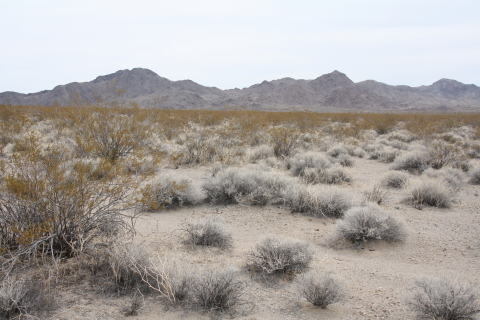 Desert tortoise habitat in Fenner Valley Desert Tortoise Conservation Bank (Photo: Business Wire)