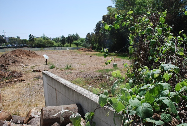 JUST AN EMPTY LOT NOW -- But soon this space could be teaming with human wildlife.