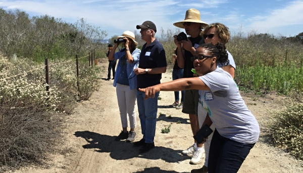 LOOK QUICK - Wander through the wetlands on a guided tour and see El Segundo blues in action. PHOTO: FRIENDS OF BALLONA WETLANDS