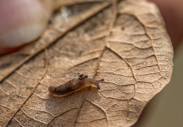 snailblitz_Slug