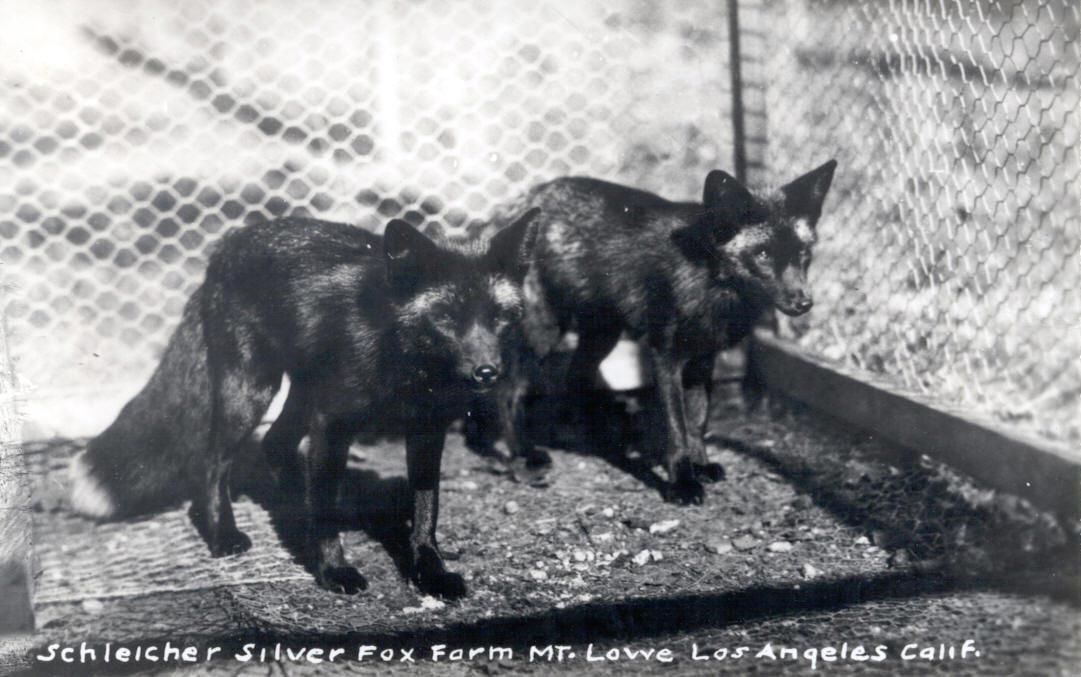 mountlowe-collection-photos-Silver-Fox-Farm-3