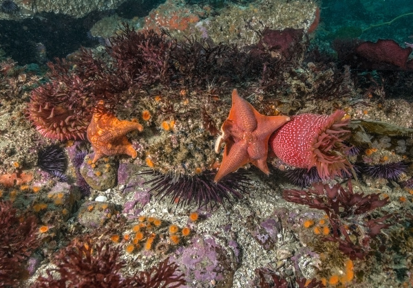 SoCal Sea Stars Recovery Needs Community Eyeballs